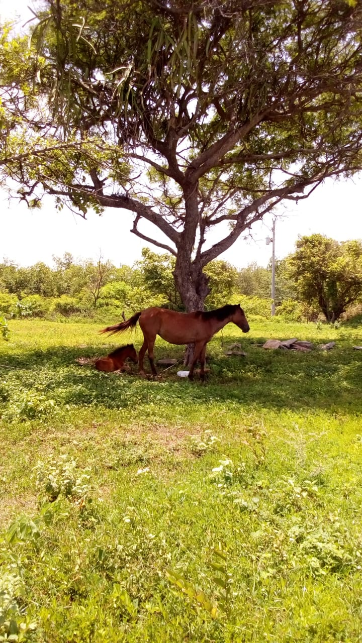 Animals Horse y Baby June22 2018